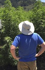 Jefe Little Hill Cultivators Cannabis farm