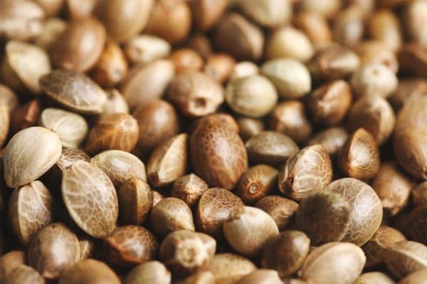 marijuana seeds in Denver Colorado 420