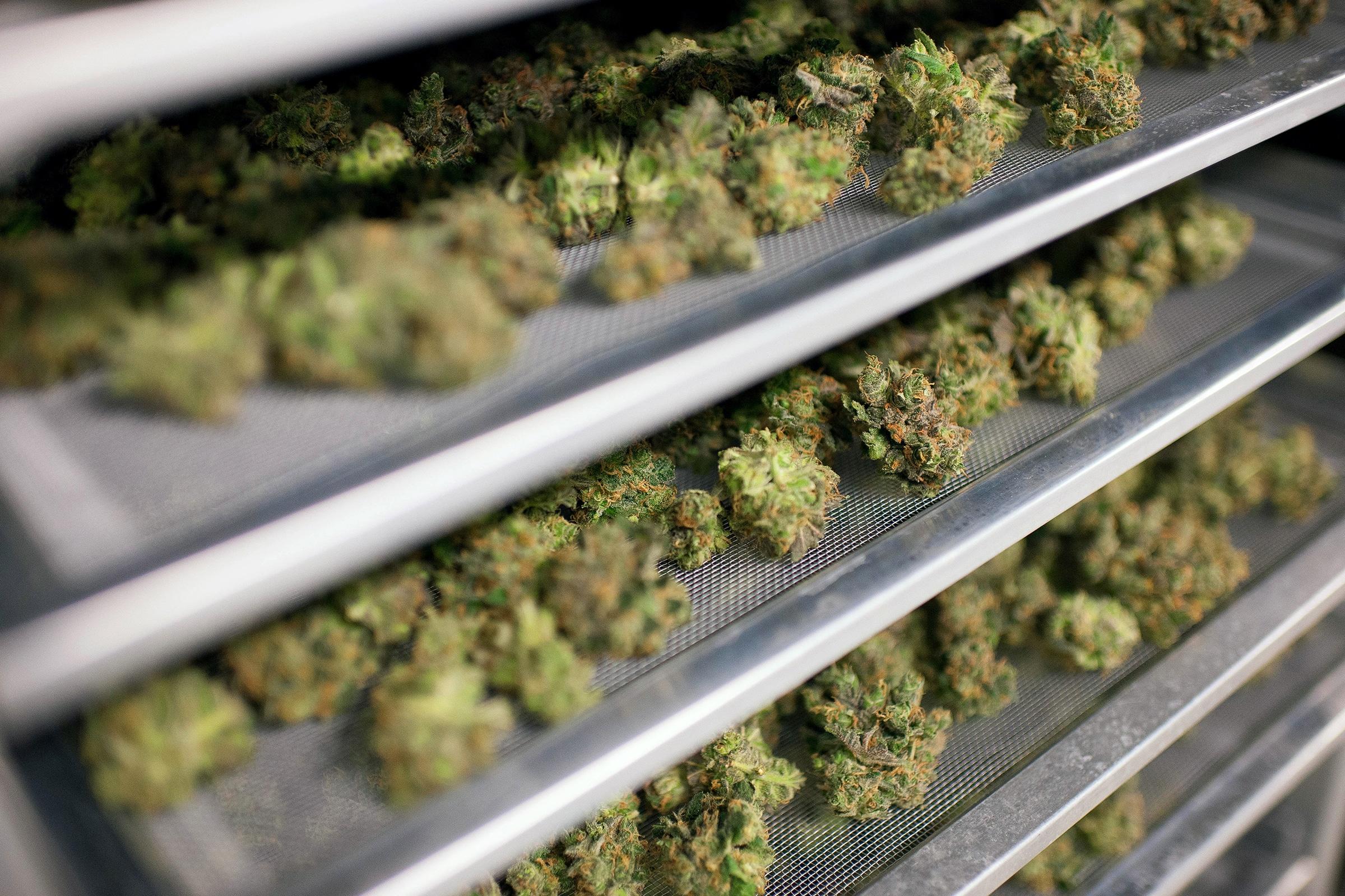 Colorado cannabis industry compliance regulations