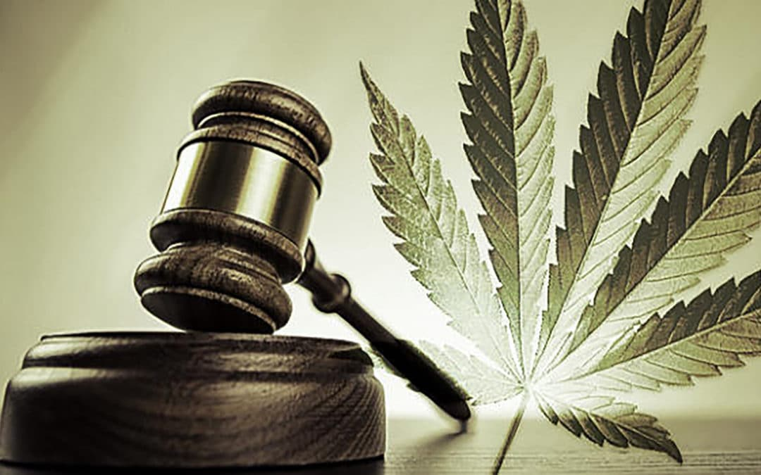 How to Navigate Cannabis Law and Compliance: Vicente Sederberg LLC