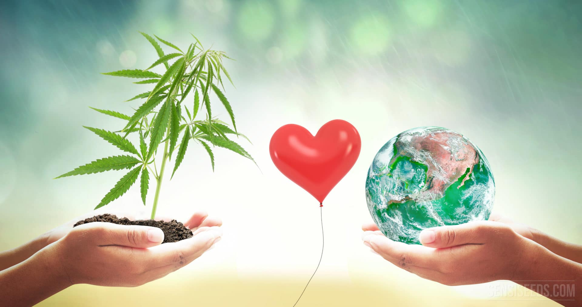 Sustainable Cannabis in Denver