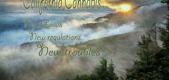 california cannabis laws mean new struggles for growers
