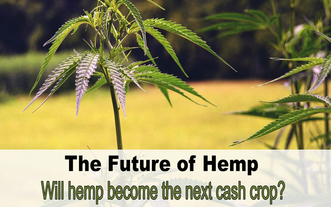 The Future of the Hemp Industry