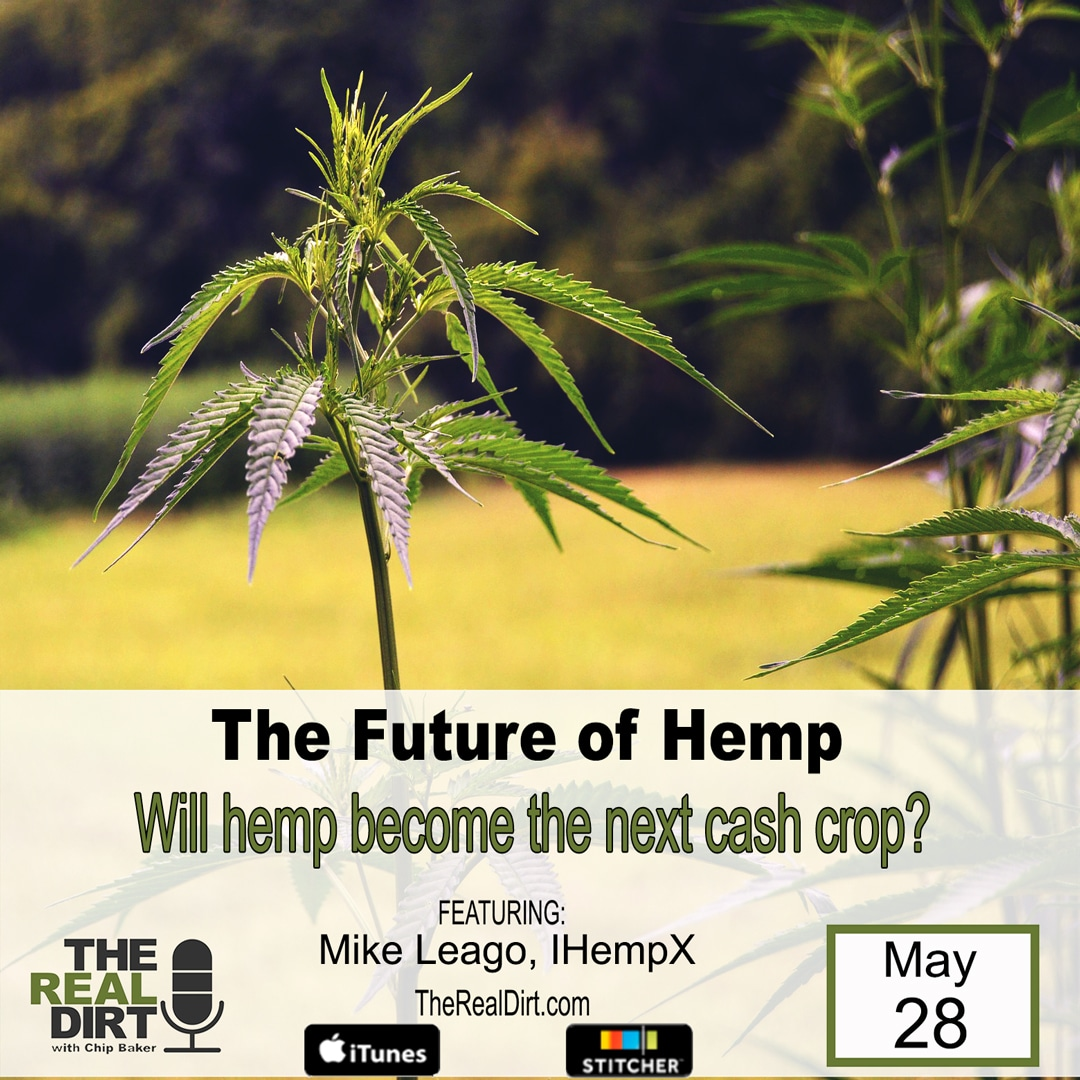 the hemp industry faces a great future