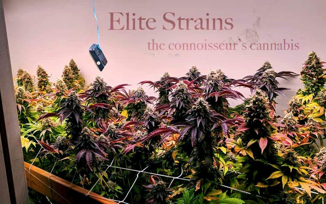 Elite Strains