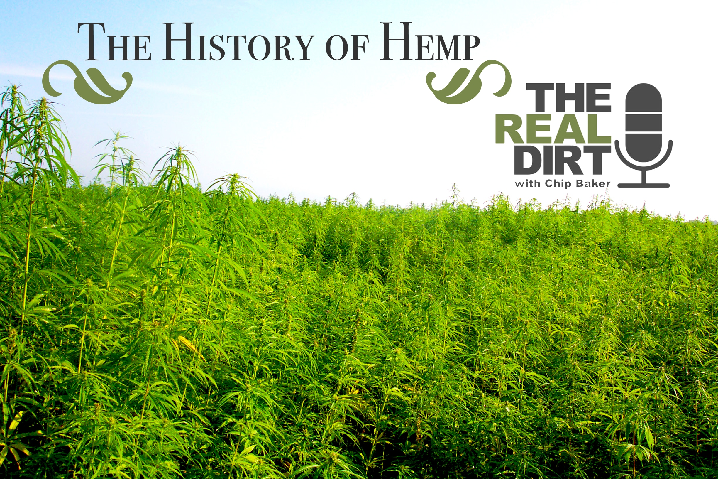 the history of hemp in europe and america