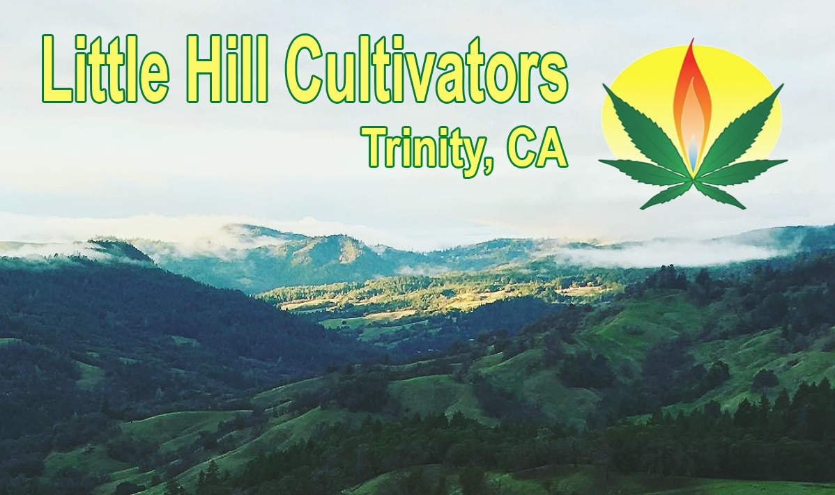 little hill cultivators interview