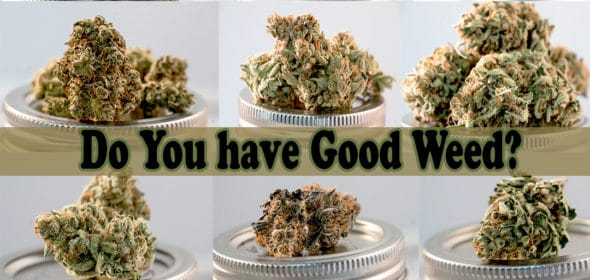 do you have good weed?