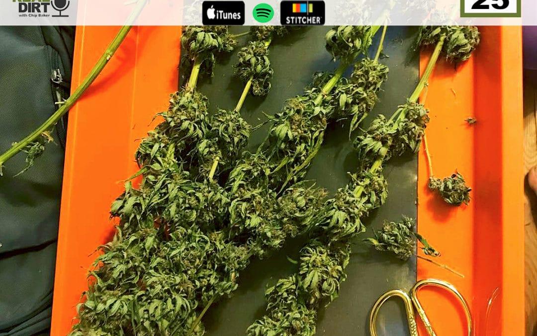 Harvesting Cannabis: Harvest Special Pt. 1
