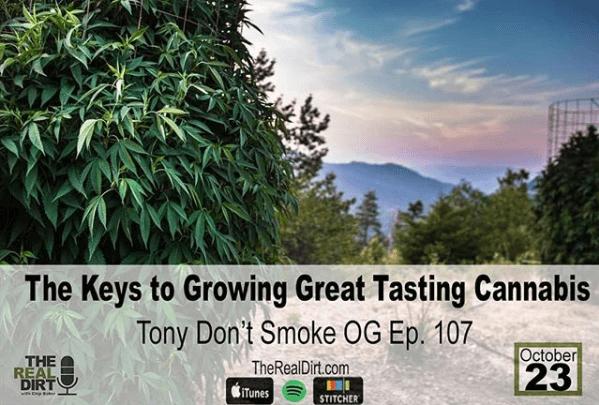 Maintaining Cannabis Quality: Tony Don't Smoke OG Ep. 107