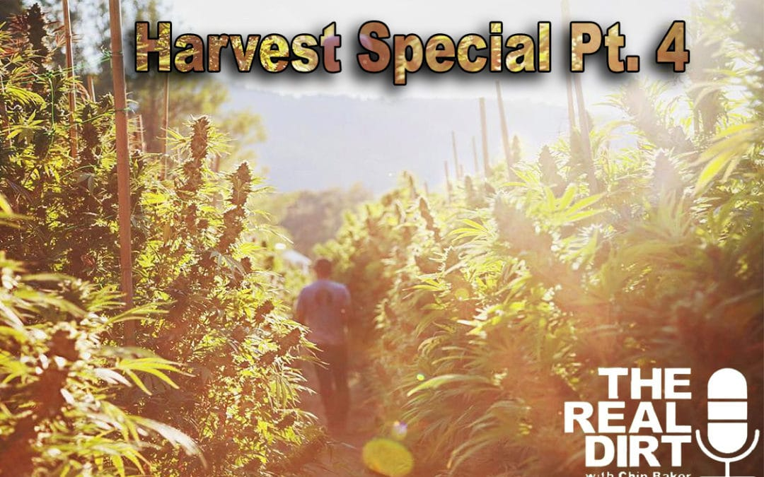 Cannabis Culture and Community: Harvest Special Pt. 4