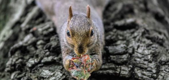 refugee squirrels out here eating all the weed!