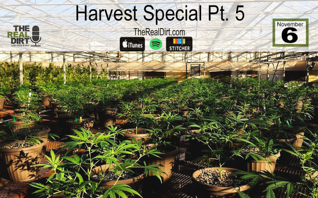 Is Hemp Constitutional in Colorado? Harvest Special Pt. 5