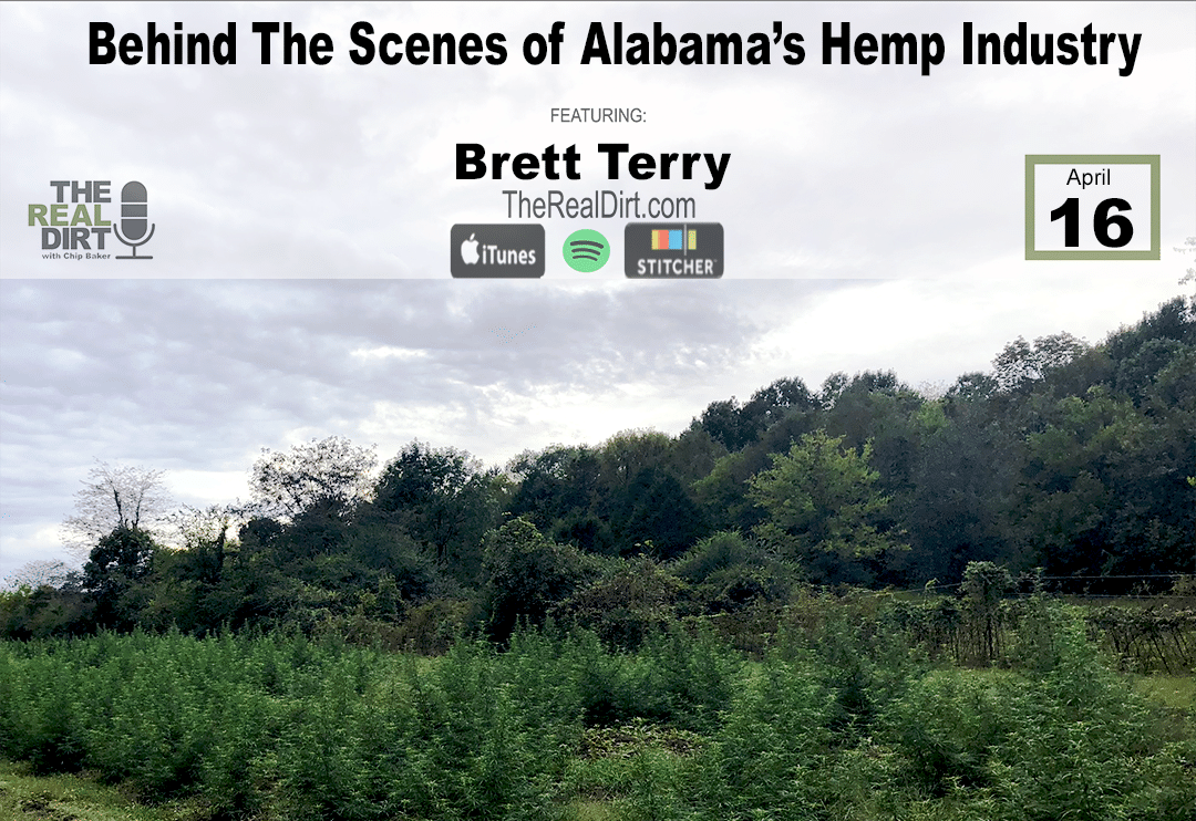 inside the hemp industry in Alabama