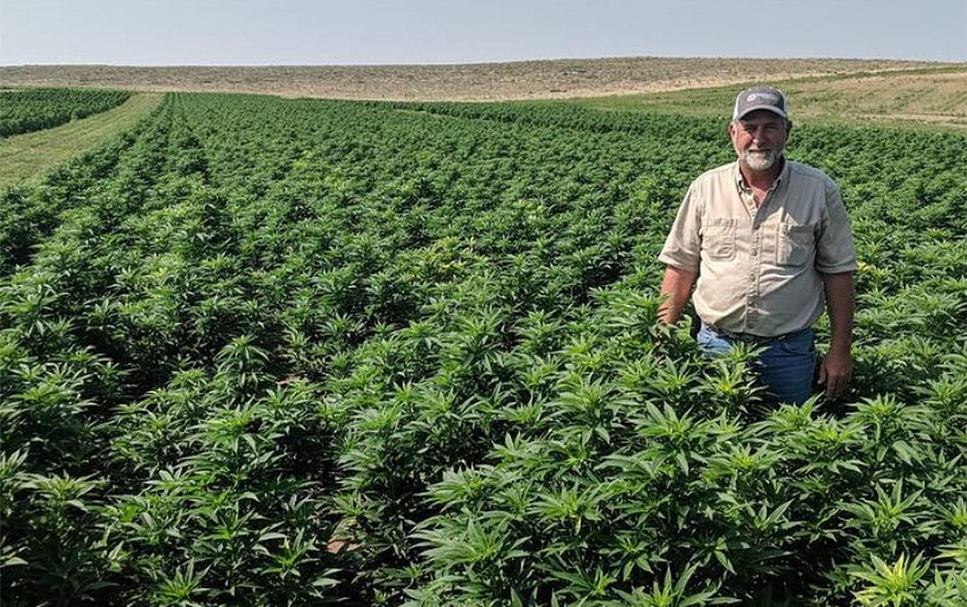 Everything You Need to Know About Growing Alabama Hemp (Pt. 1)