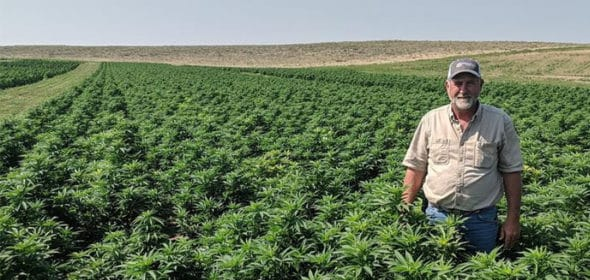 farmers are entering the legal hemp industry