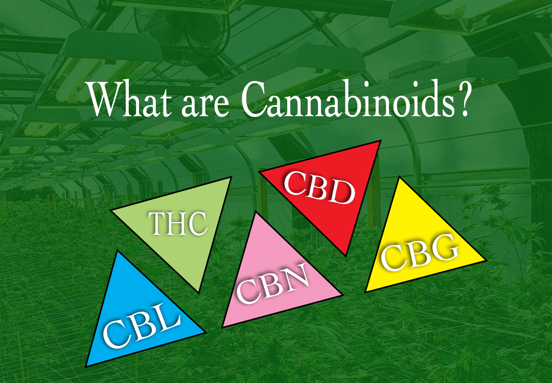 what is a cannabinoid?