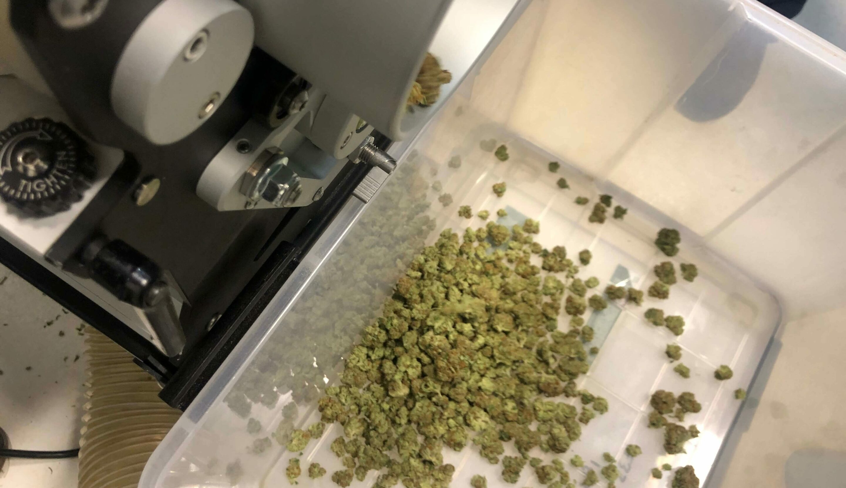 wet vs dry trimming cannabis with machines or by hand