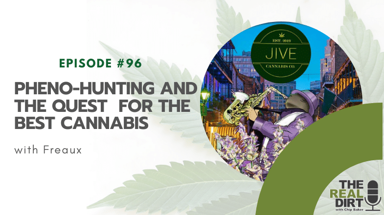 Pheno-Hunting and the Quest for the Best Cannabis