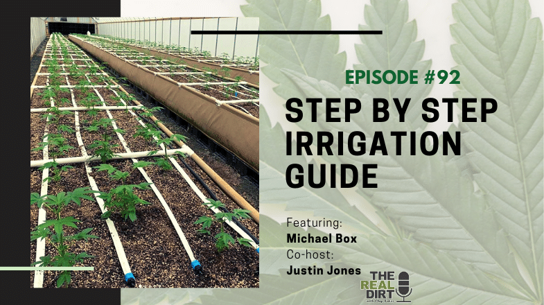 cannabis irrigation set up guide