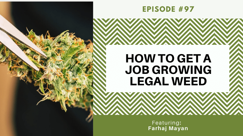 How to Get a Job Growing Legal Weed