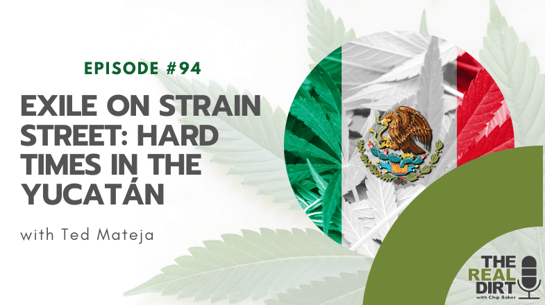 Exile on Strain Street: Hard times in the Yucatán