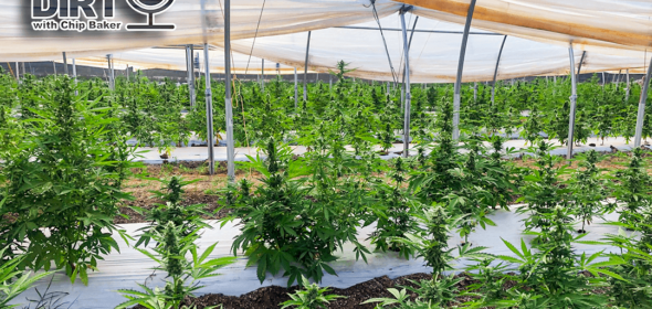 cannabis greenhouse for outdoor growing