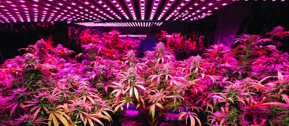 The History of Grow Lights and the Rise of LEDs