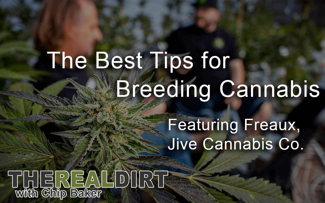 The Best Tips for Breeding Cannabis