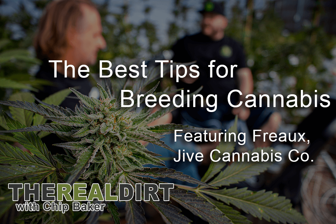 professional cannabis growers on breeding cannabis