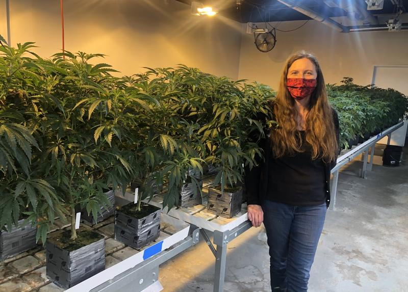 Oklahoma medical marijuana boom could be short lived, some worry