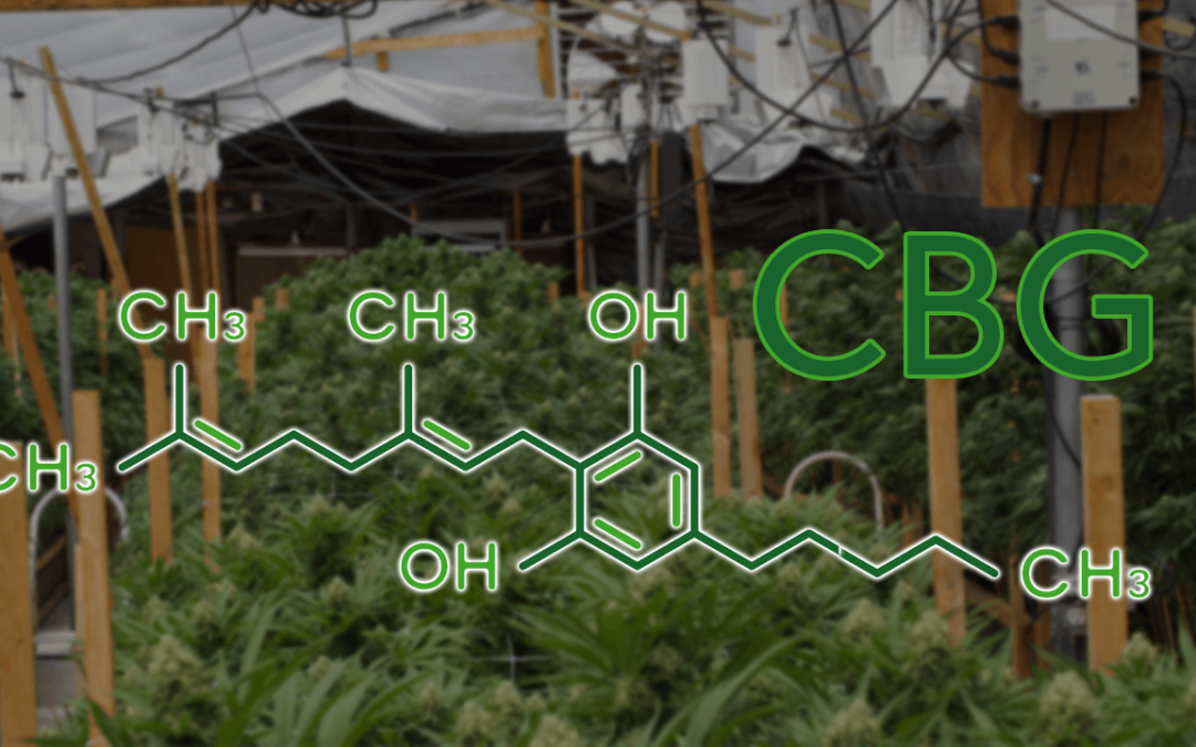 What is CBG? Cannabigerol and CBG Benefits