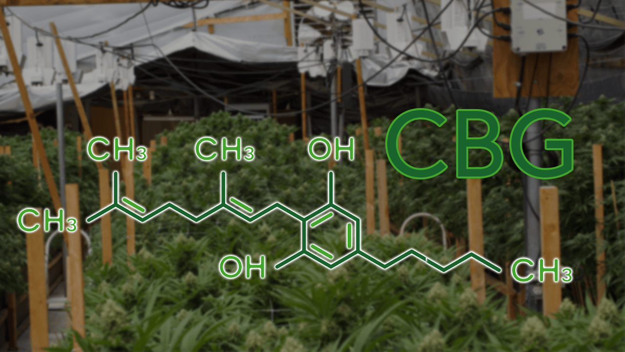Cbg, what is it and what are its benefits?