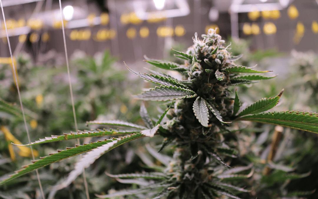 Kansas Lawmakers Push To Legalize Medical Marijuana In 2021