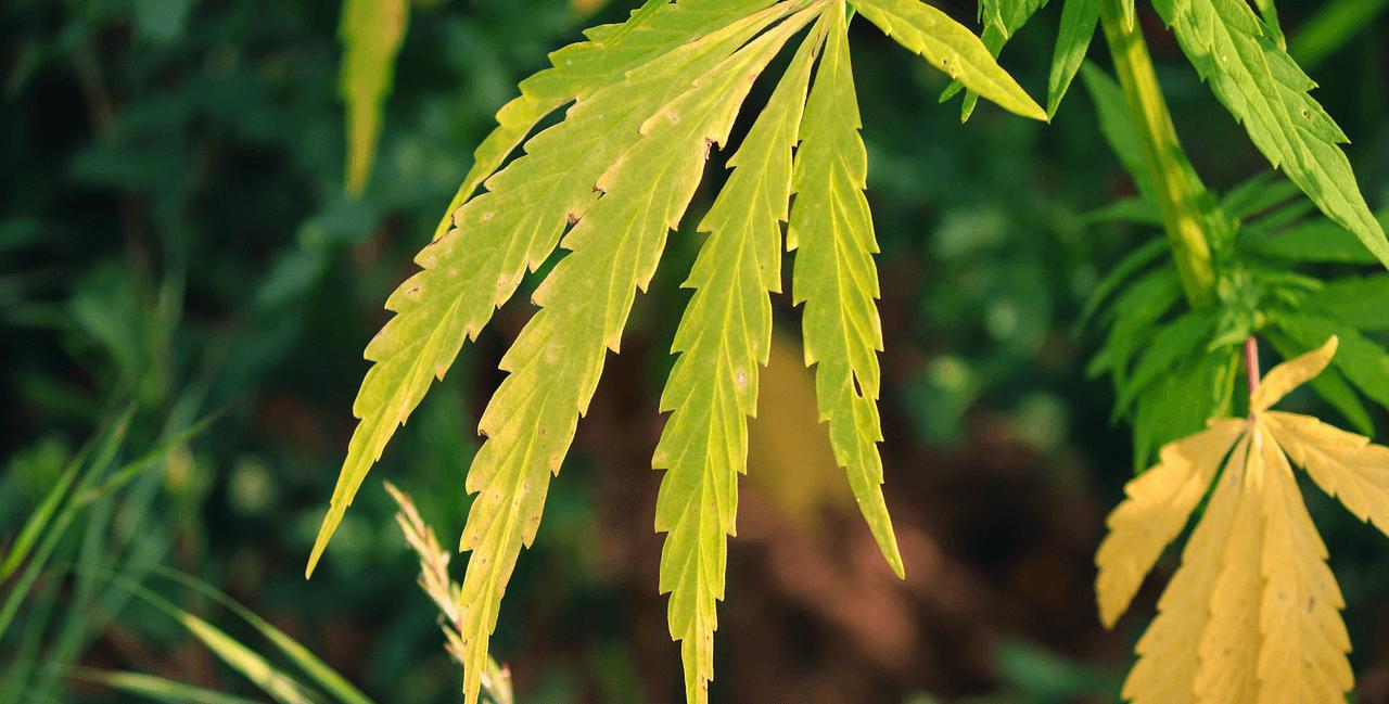 North Dakota lawmaker proposes cannabis legalization bill