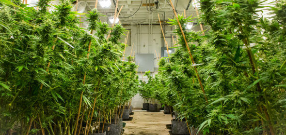 The legal hemp industry has had a turbulent couple of years.