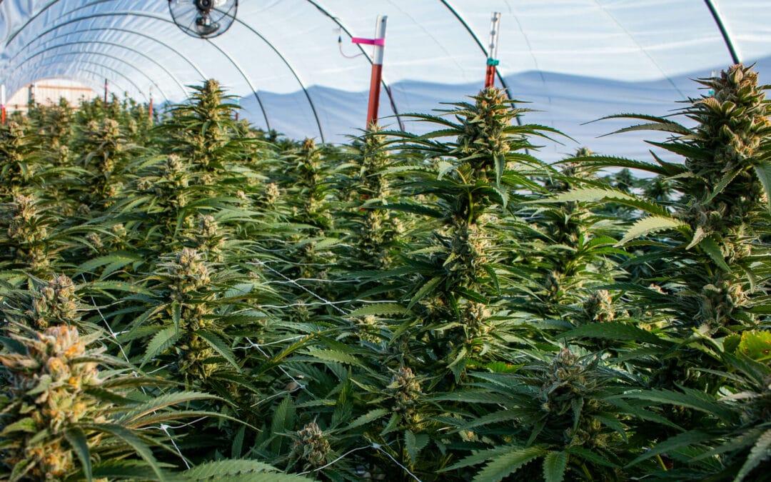 Murphy signs N.J. legal weed bills, ending 3-year saga