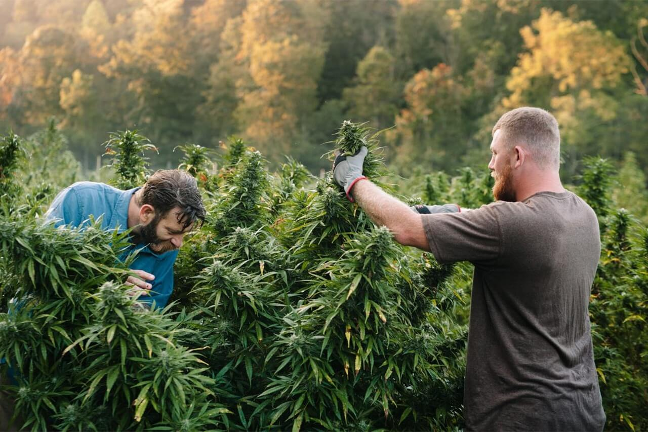 cannabis jobs surpass 300,000 in the US