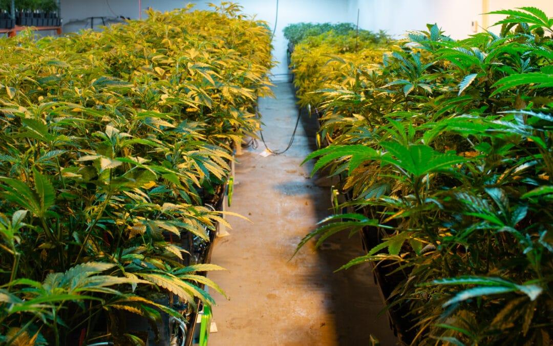 Alabama governor signs medical marijuana legislation