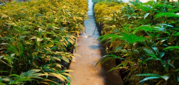Alabama medical marijuana signed by Governor