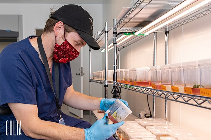 CULTA Launches Maryland's First Cannabis Tissue Culture Program