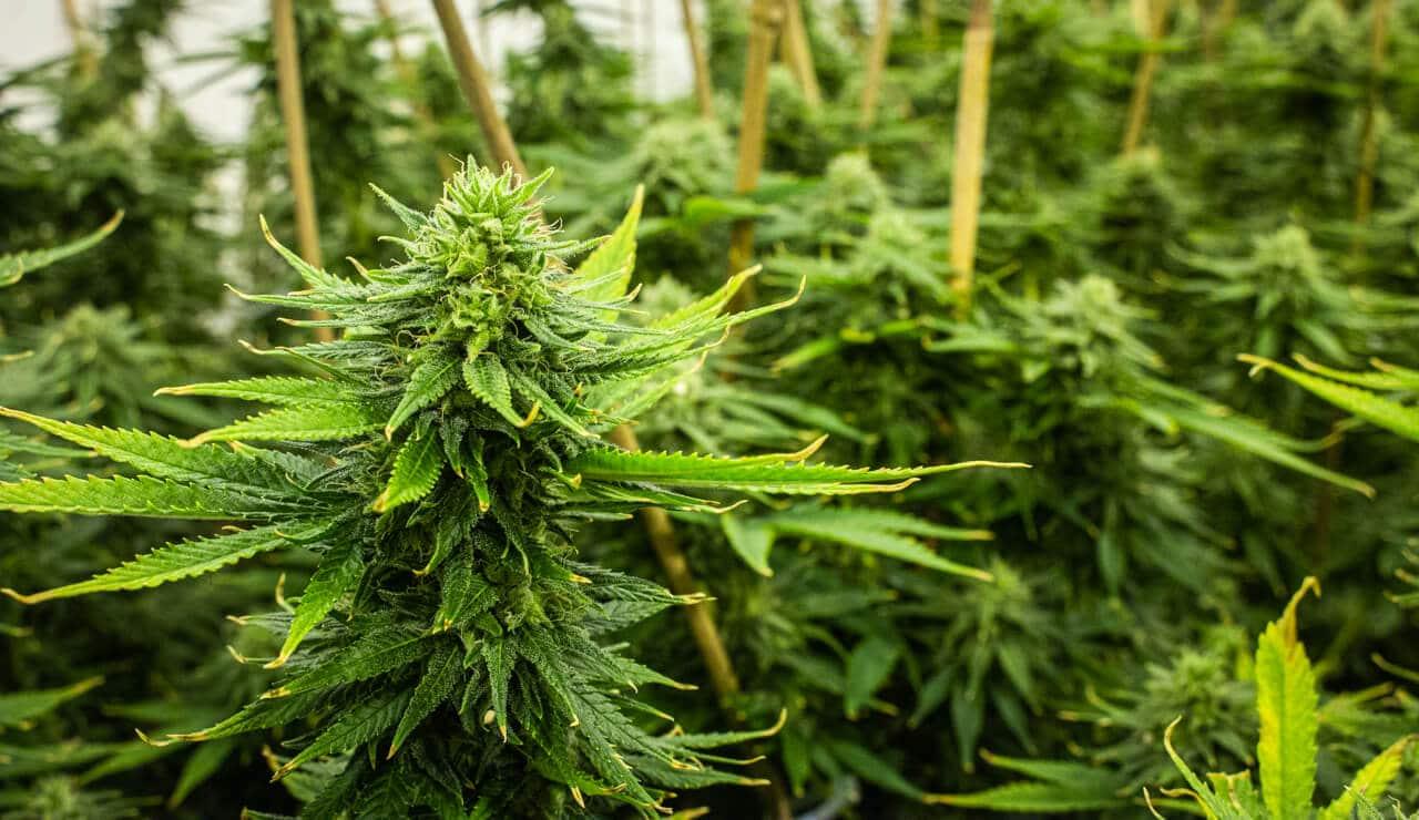 Rhode Island cannabis legalization bill passed in Senate