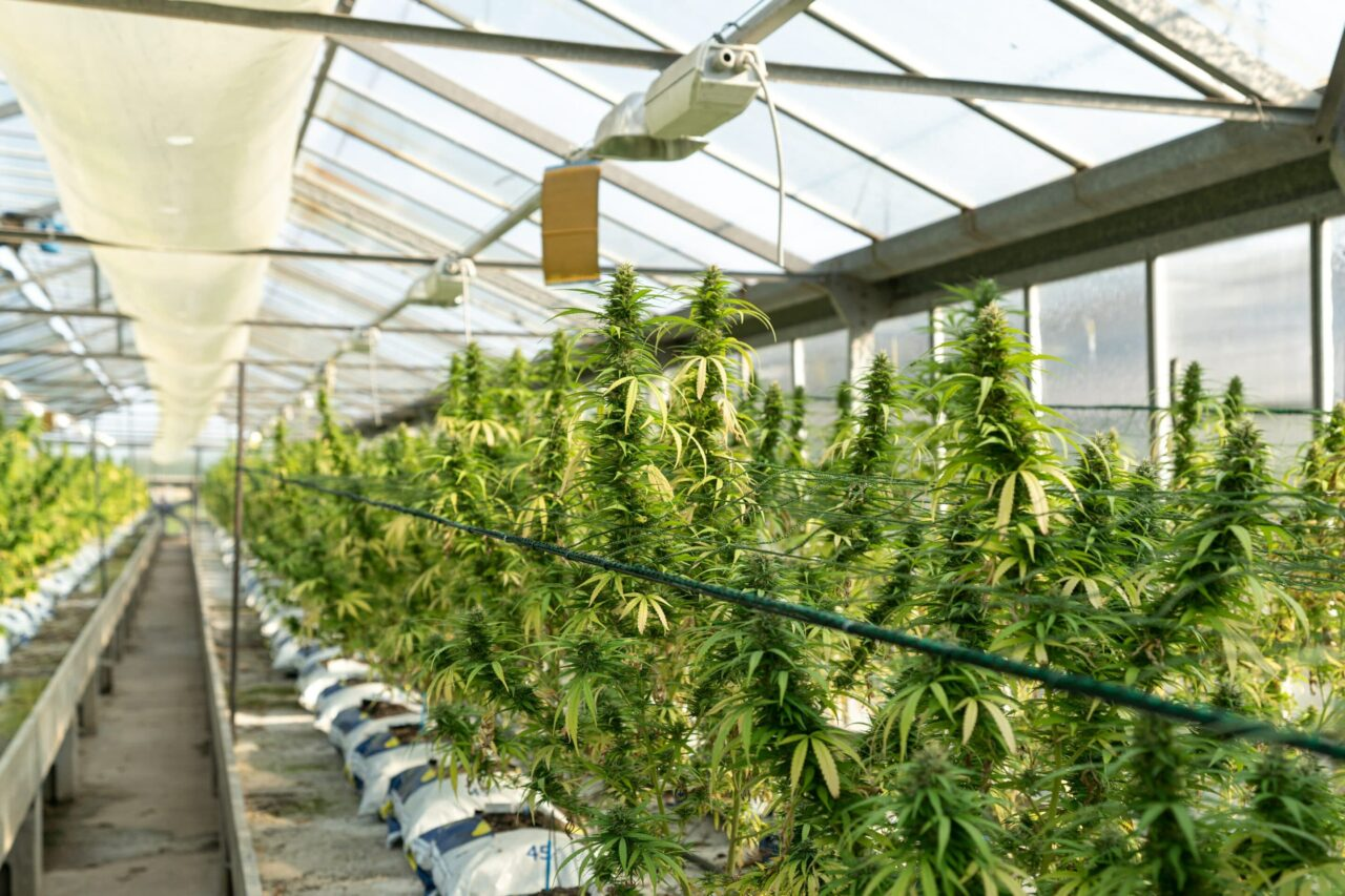 California legal marijuana industry is getting $100 million from government for support