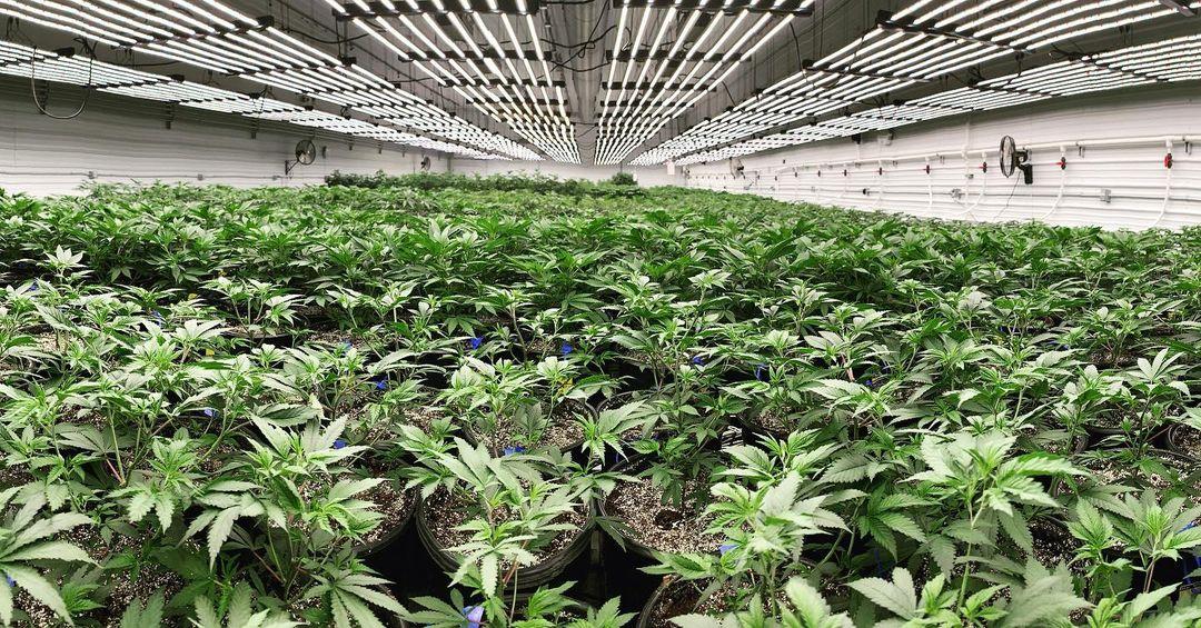 Missouri Medical Marijuana Sales Set Record in June