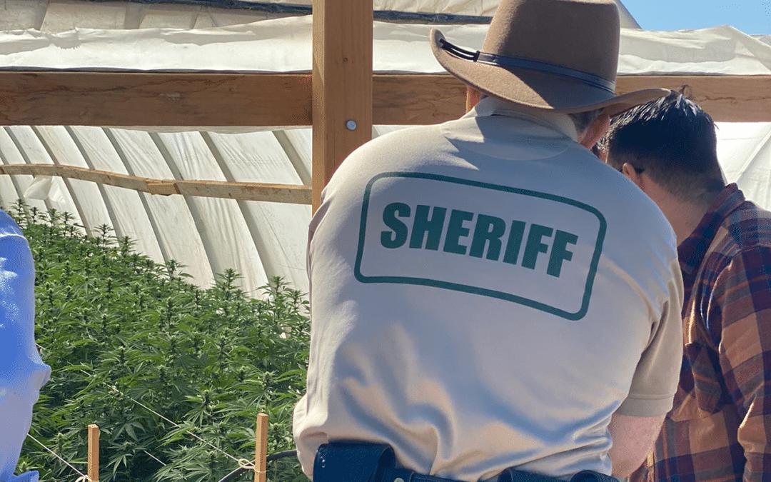 $1.19 billion worth of marijuana seized in California bust