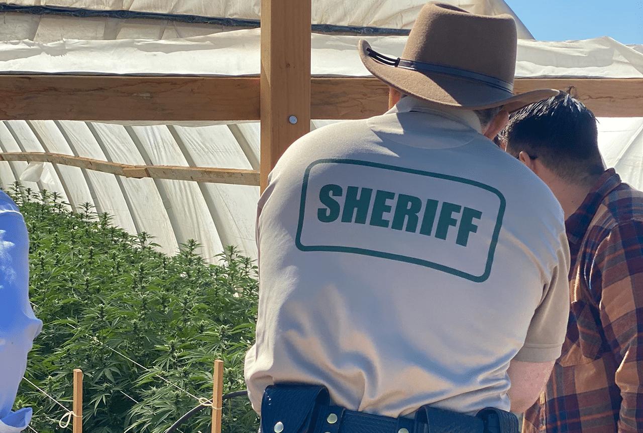 california cannabis bust