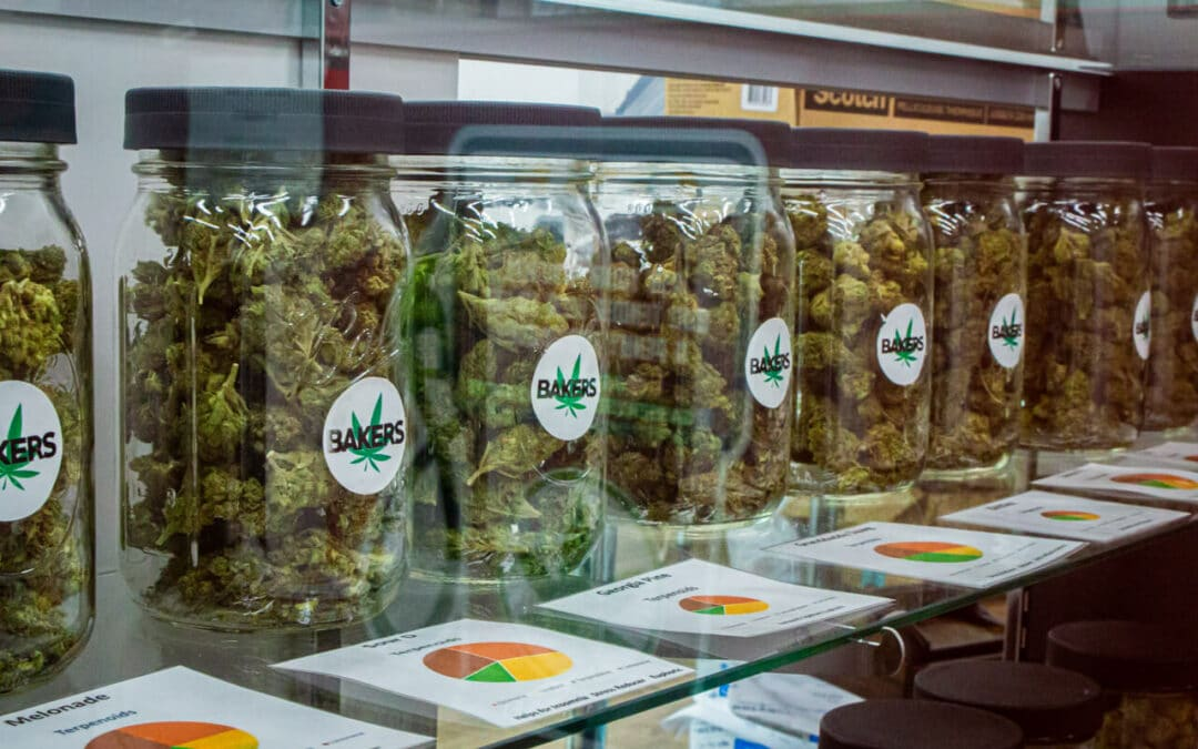 More states impose cannabis potency laws