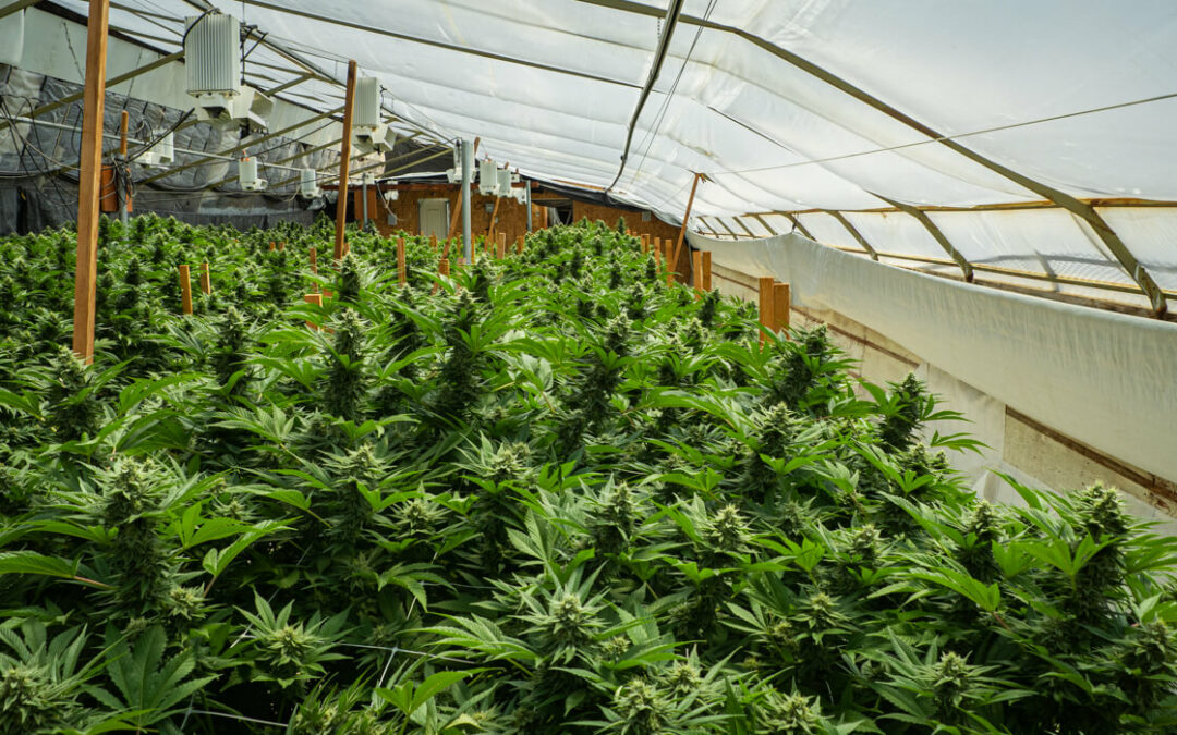 Humboldt County announces more than $2 million in grant funding for cannabis farmers