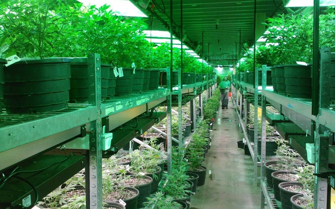 New Jersey Cannabis Industry Rules Set by Regulators
