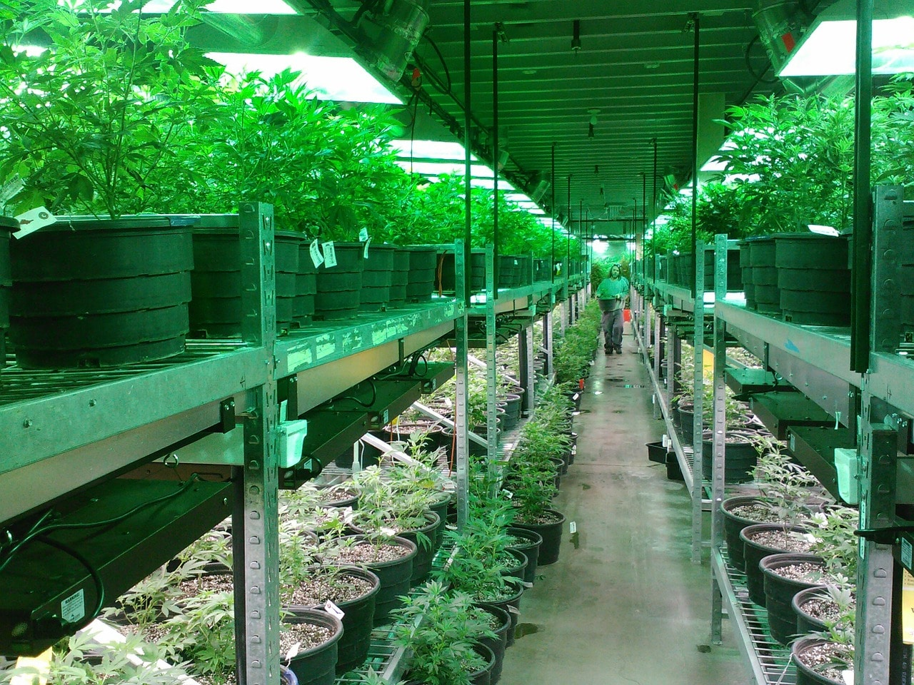 New Jersey cannabis industry has had rules established by regulators